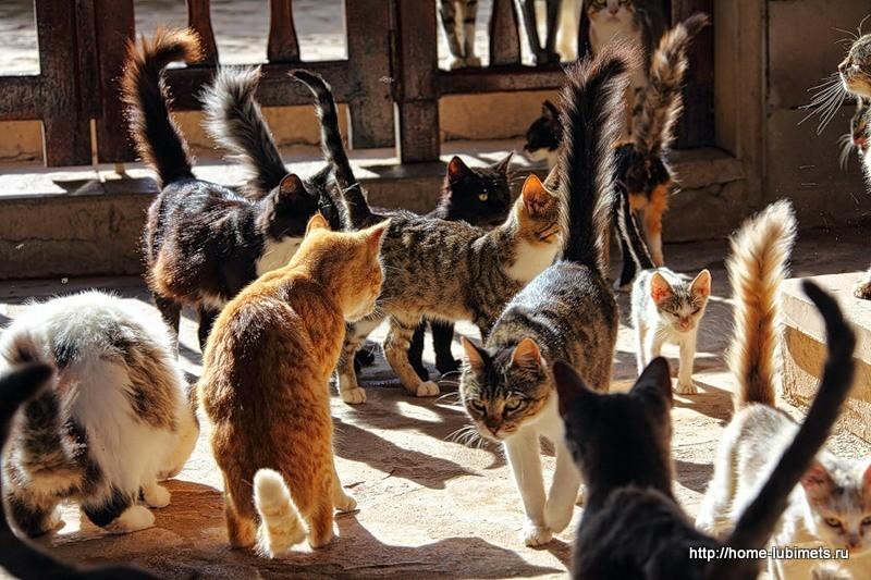 кошки благовещенского монастыря